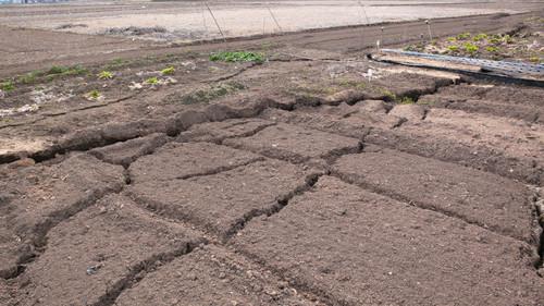 地割れの道